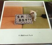 IMG_4169.JPG