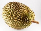 durian03.jpg