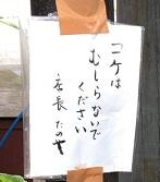 IMG_9018.JPG